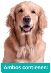 Agility Wet es un alimento húmedo para perros y gatos que contiene todos los nutrientes necesarios para una alimentación completa y balanceada.